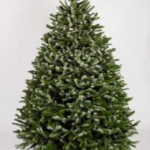 christmas-trees-5